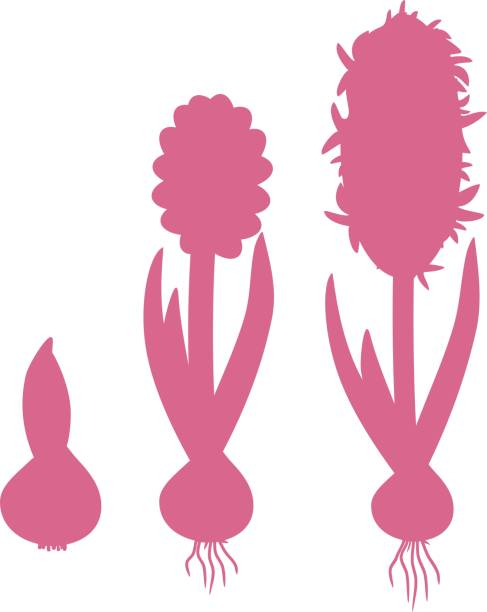 Royalty Free Asexual Reproduction Clip Art, Vector Images ...
