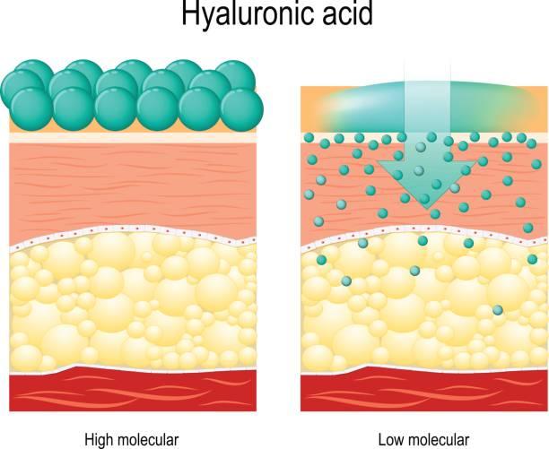 stockillustraties, clipart, cartoons en iconen met hyaluronic acid. - menselijke huid