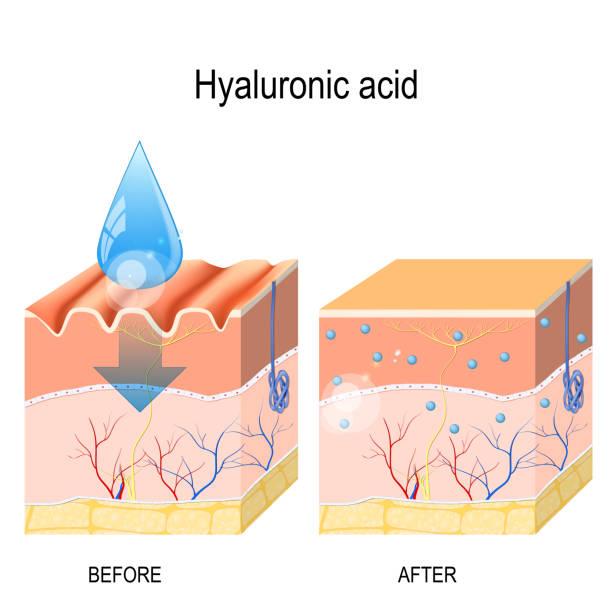 illustrazioni stock, clip art, cartoni animati e icone di tendenza di hyaluronic acid. - near