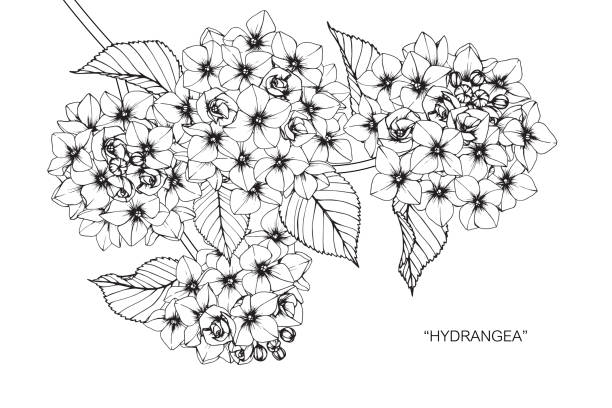 Top 30 Hydrangea Tattoo Clip Art, Vector Graphics and Illustrations ...