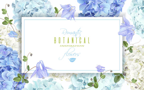 Hydrangea horizontal banner blue Vector horizontal banner with blue and white hydrangea flowers on white background. Floral design for cosmetics, perfume, beauty care products. Can be used as greeting card, wedding invitation flower part stock illustrations