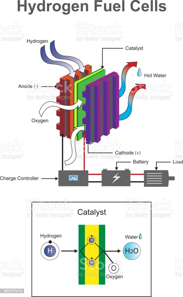 Diagram Of An Atom Cell Car Wiring Diagrams Explained