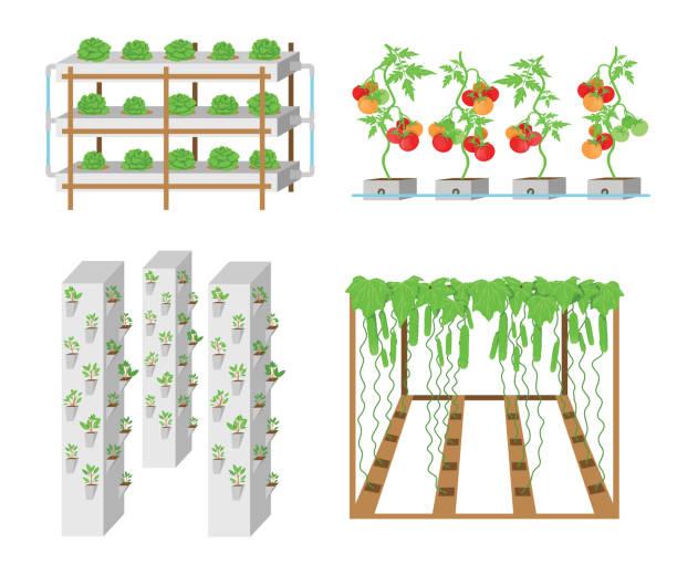 ilustrações de stock, clip art, desenhos animados e ícones de hydroponic vegetables growth systems in vector. - aquacultura