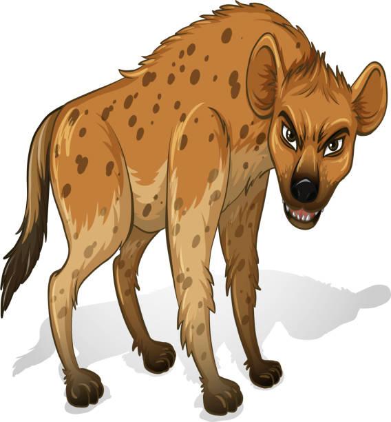 stockillustraties, clipart, cartoons en iconen met hyena - hyena
