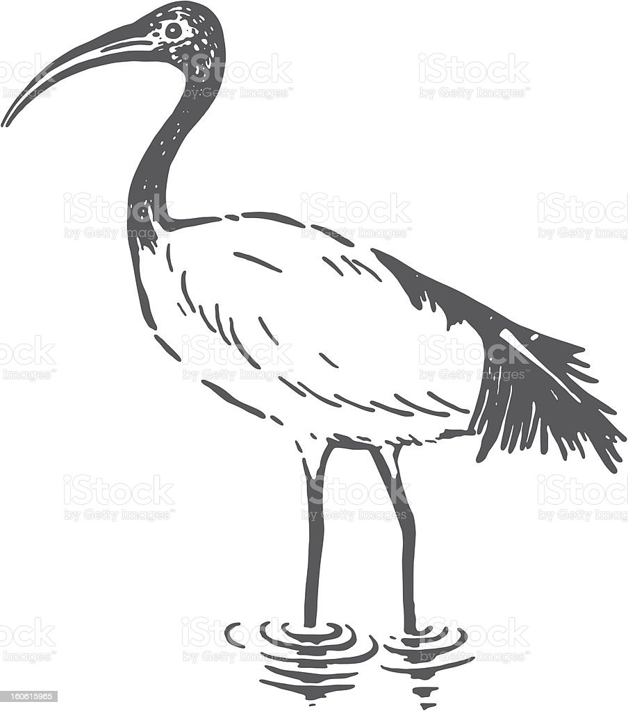 Ibis stock vector art more images of animal 160615965 istock ibis royalty free ibis stock vector art amp more images of animal buycottarizona Choice Image