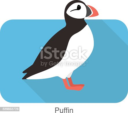 Iceland bird, flat cute puffin, vector illusration