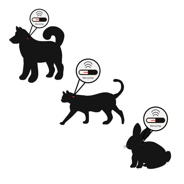 Lost Dog Clipart
