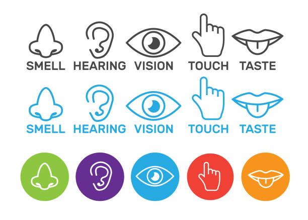 stockillustraties, clipart, cartoons en iconen met pictogram menselijke zintuigen: visie, gehoor, geur, aanraking, smaak. pictogrammen zin neus, oor, oog, hand vector - tasting
