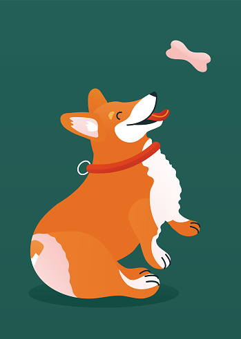 Icon of corgi  dog for a cover book or greeting card.