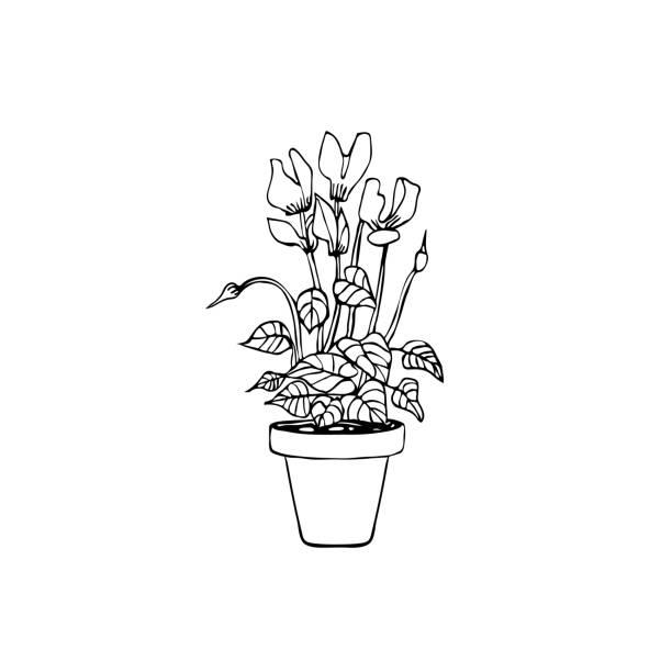 topf pflanze handgezeichneten stil-ikone. cyclamen auf weißem hintergrund für anderes design. - alpenveilchen stock-grafiken, -clipart, -cartoons und -symbole