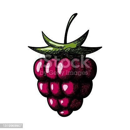 istock Icon Of Raspberry 1319969907