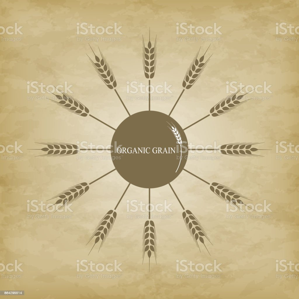 Icon of wheat spikelets layout royalty-free icon of wheat spikelets layout stock vector art & more images of agriculture