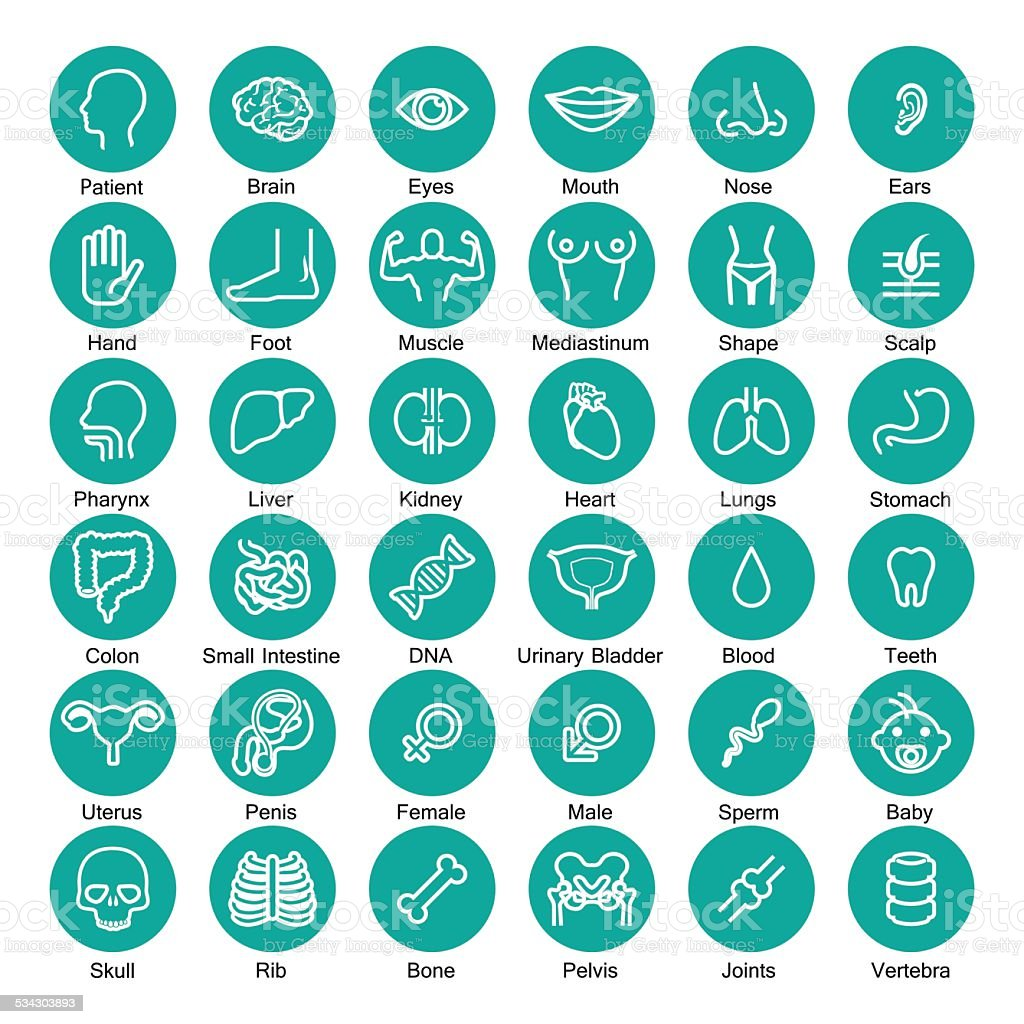 icon organ set vector art illustration