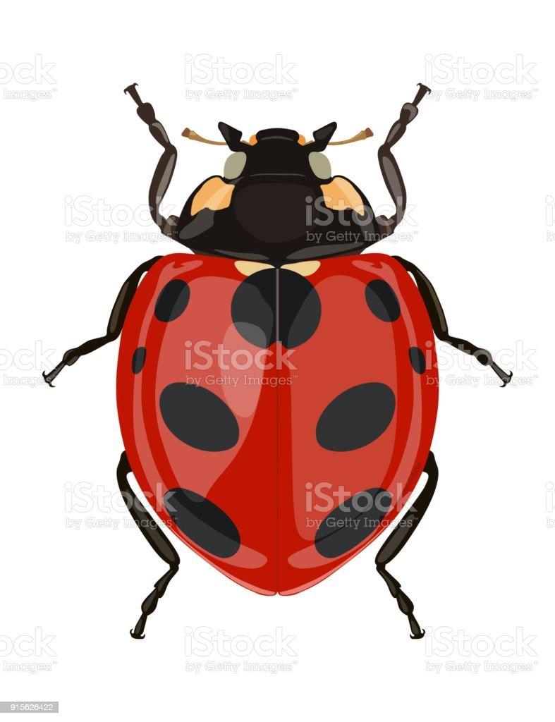 Icon painted ladybug. Beetles. Vector illustration