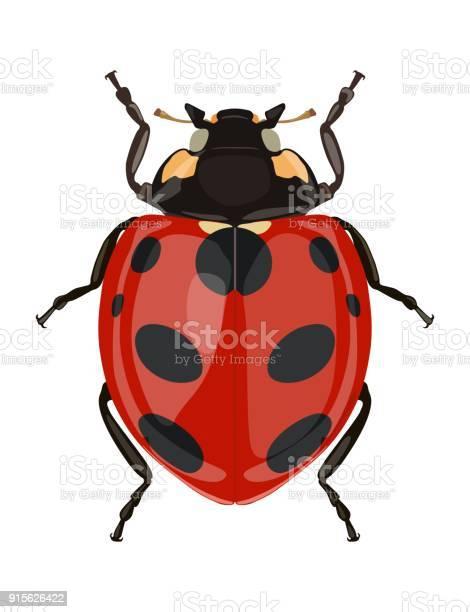 Icon painted ladybug beetles vector illustration vector id915626422?b=1&k=6&m=915626422&s=612x612&h=z5 z9kycefiewr8sbffhatc8rgmpkjdat7hfdeh8xsu=