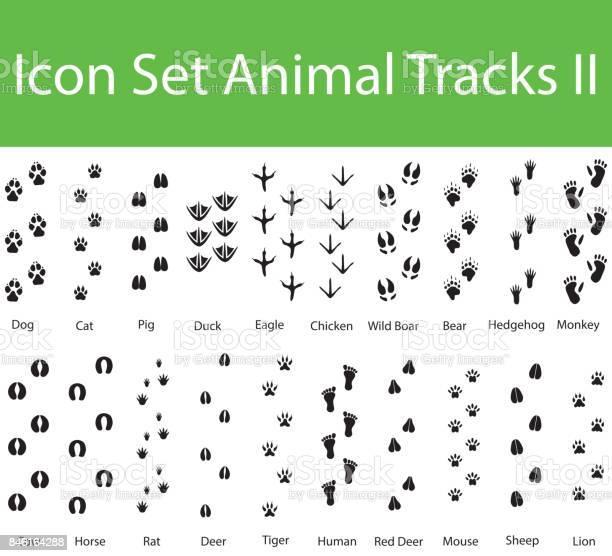 Icon set animal tracks ii vector id846164288?b=1&k=6&m=846164288&s=612x612&h=oeqg3qtsflu2eccidj4l02tyzhmd08eqqdnscxgouoc=