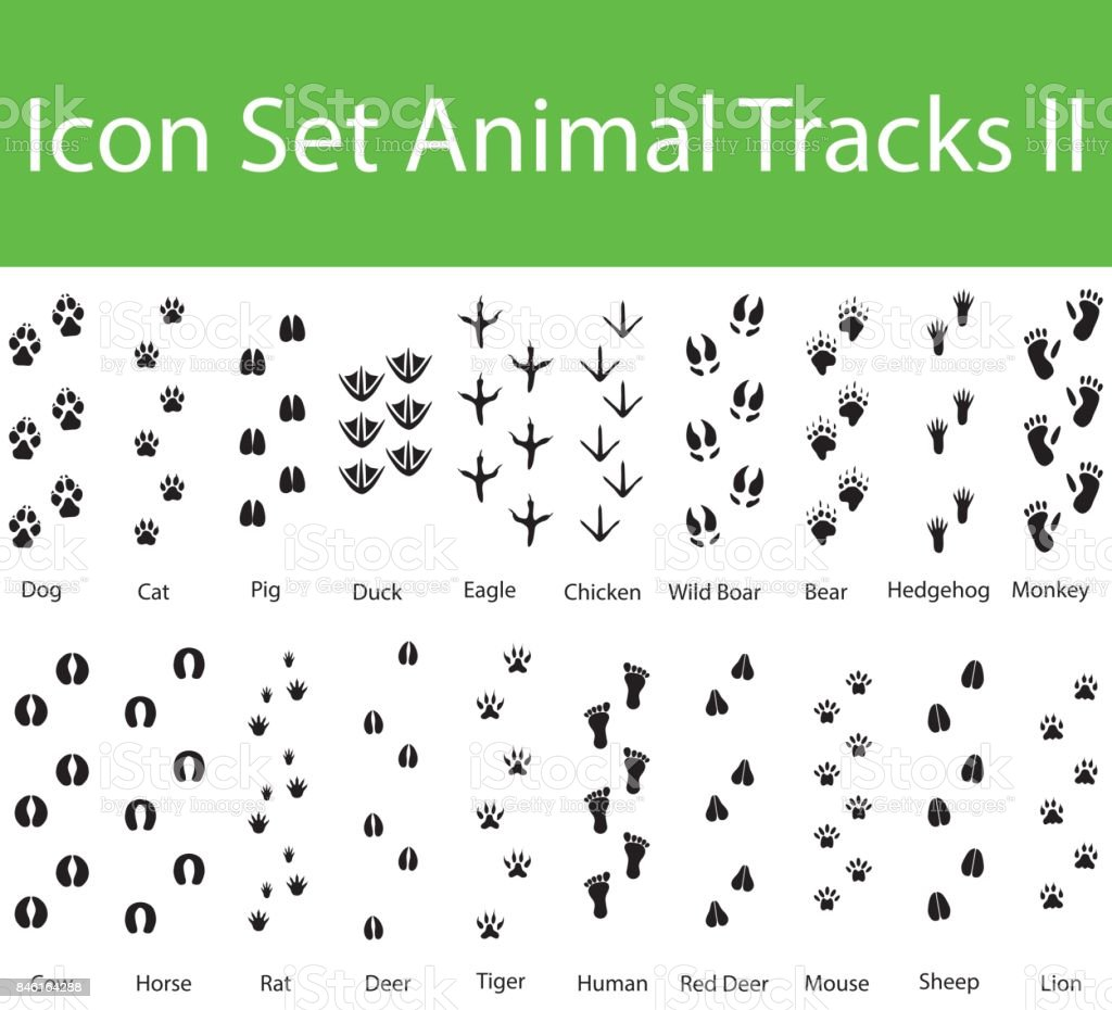 Icon Set Animal Tracks II vector art illustration