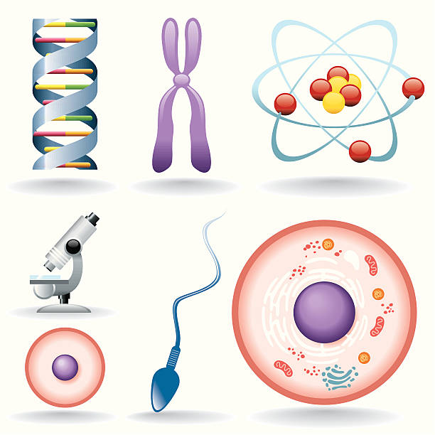 Icon Set, biology Icon Set, biology things on white background, make in adobe Illustrator (vector) human cell stock illustrations