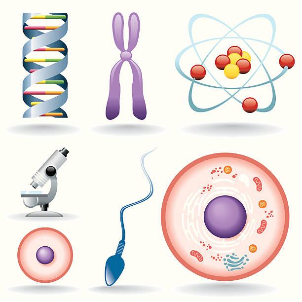 Icon Set, biology Icon Set, biology things on white background, make in adobe Illustrator (vector) chromosome stock illustrations