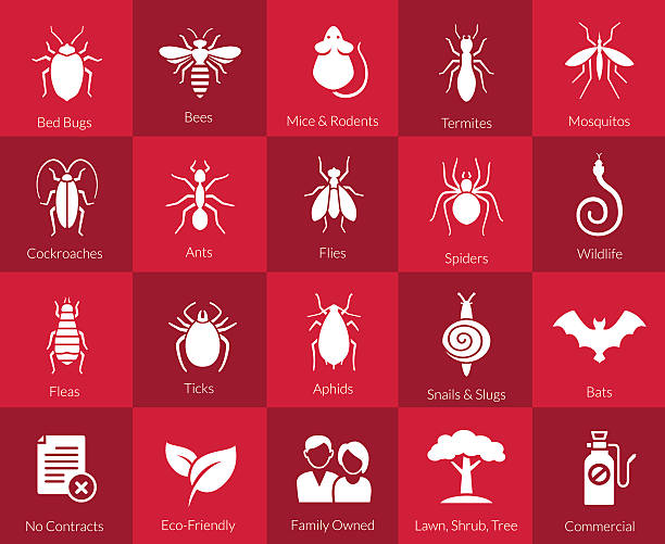 icon set for pest control companies - bugs stock illustrations, clip art, cartoons, & icons
