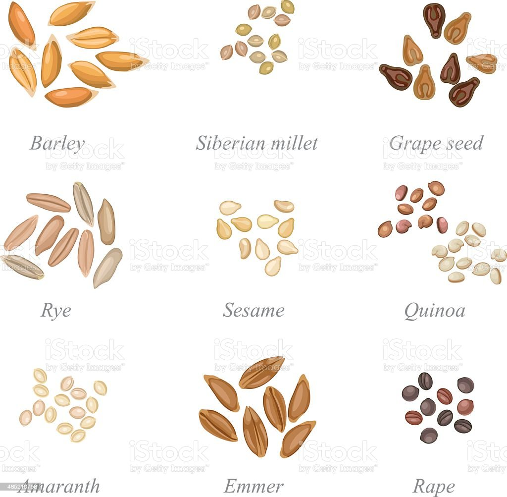 Icon set of cereal grains part 2 vector art illustration