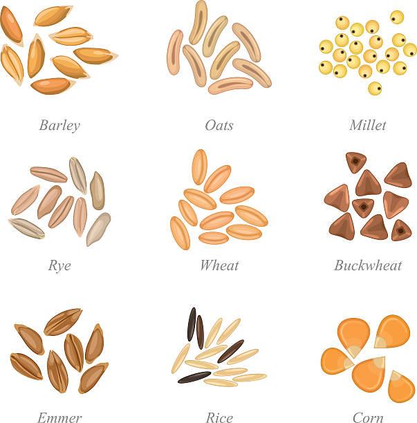 icon-set für getreide getreide teil 3 - dinkelbrot stock-grafiken, -clipart, -cartoons und -symbole