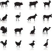 Icon set of farm animals on white background