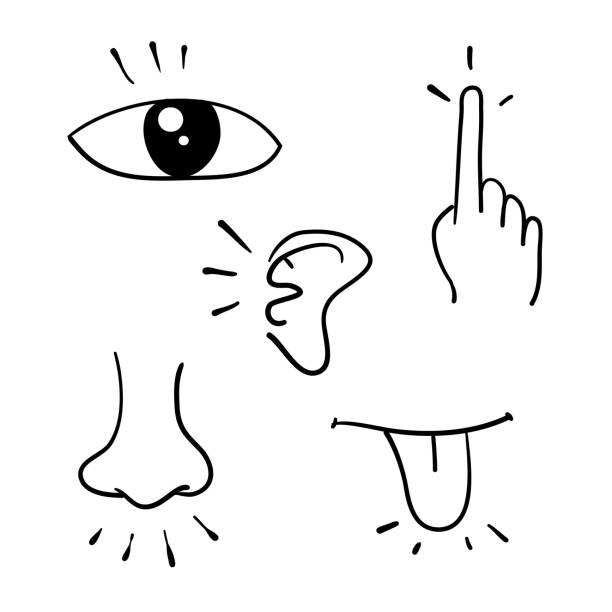 icon-set von fünf menschlichen sinnen doodle handgezeichneten stil vektor - sensorischer impuls stock-grafiken, -clipart, -cartoons und -symbole