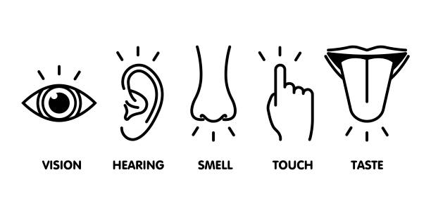 Icon set of five human senses: vision - eye , smell - nose , hearing - ear , touch - hand , taste - mouth with tongue . Simple line icons and color circles, vector illustration Icon set of five human senses: vision - eye , smell - nose , hearing - ear , touch - hand , taste - mouth with tongue . Simple line icons and color circles, vector illustration. sensory perception stock illustrations