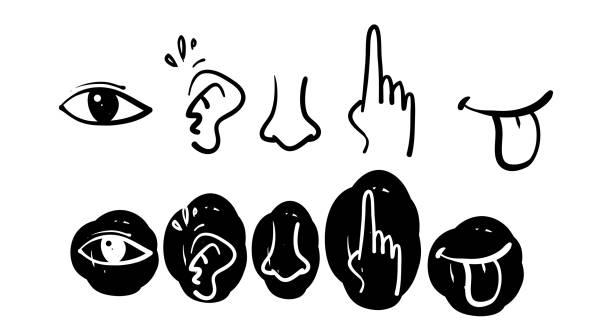 ikonensatz von fünf menschlichen sinnen. sehauge, geruch nase, hörohr, berühren hand, geschmack mund mit zunge doodle stil - sensorischer impuls stock-grafiken, -clipart, -cartoons und -symbole