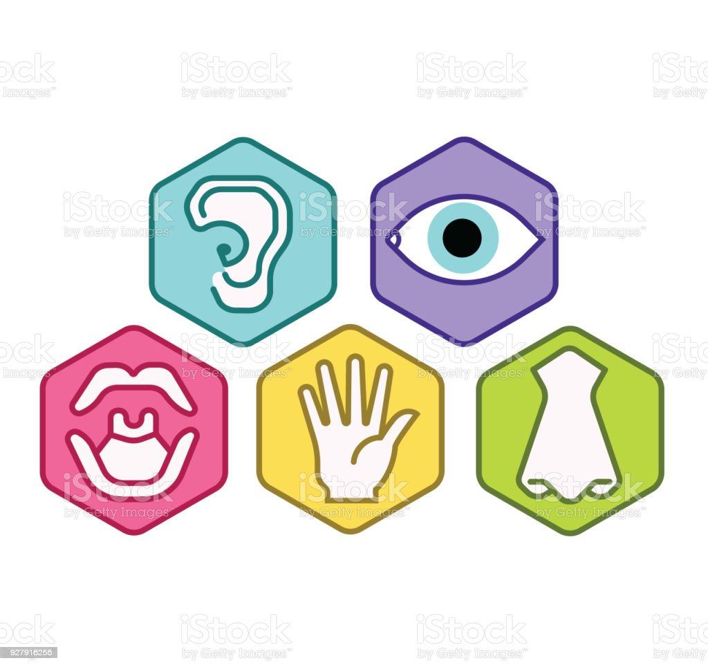 Icon Set Of Five Human Senses Vision Eye Smell Nose Hearing Ear