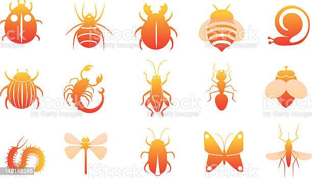 Icon set of insects vector id148148245?b=1&k=6&m=148148245&s=612x612&h=nvpz4owr56rdfvsnbo5x96i5jshjqf0p0f52t czijo=