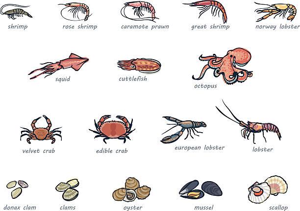Symbol ein set von marketable Meeresfrüchte – Vektorgrafik
