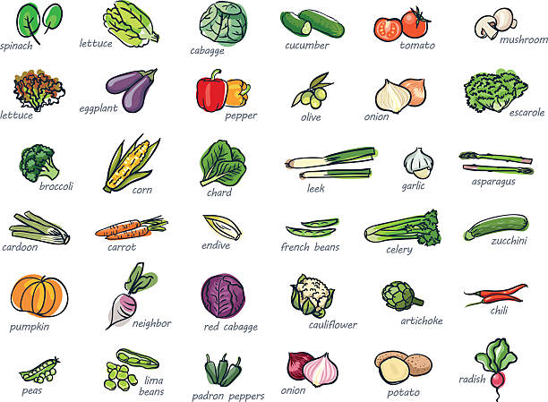 Icon set of vegetables Colorful icon set of hand drawn vegetables fruit drawings stock illustrations