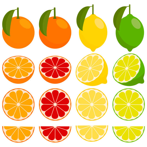 icon set with vector citrus. vector art illustration