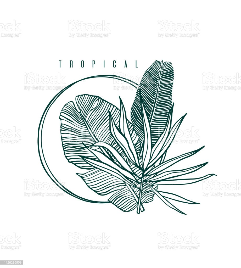 Icon With Palm And Banana Leaf Outline Drawing Of Tropical Leaves Nature Label With Exotic Foliage Vector Illustration Stock Illustration Download Image Now Istock Download 341 tropical leaf outline free vectors. icon with palm and banana leaf outline drawing of tropical leaves nature label with exotic foliage vector illustration stock illustration download image now istock
