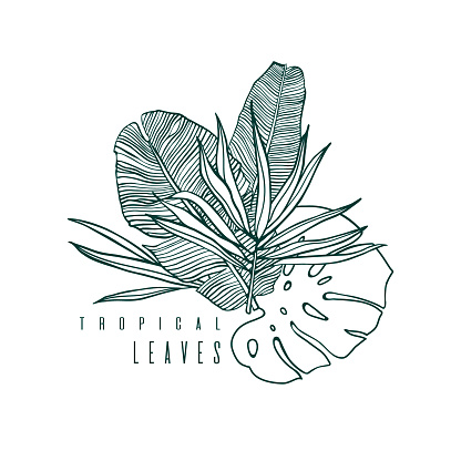 Icon with palm, monstera and banana leaf. Outline drawing of tropical leaves. Nature label with exotic foliage. Vector illustration.