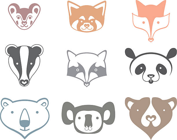 Best Red Panda Illustrations Royalty Free Vector Graphics