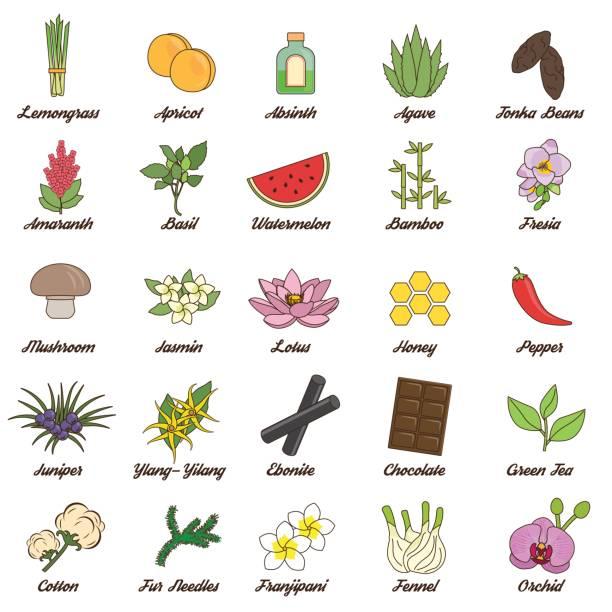 symbole für aromatische pflanzen, herbas und wald - eisenhut stock-grafiken, -clipart, -cartoons und -symbole