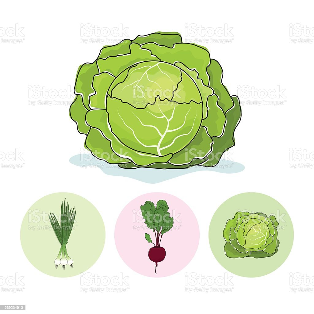 Icons green onion,beet,cabbage royalty-free icons green onionbeetcabbage stock vector art & more images of 2015