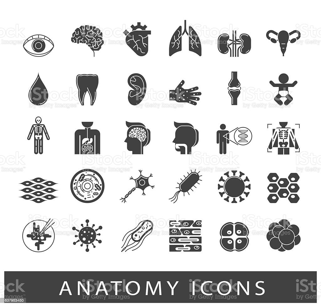 Icons presenting various organs and parts of the human body vector art illustration