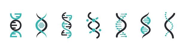 ilustraciones, imágenes clip art, dibujos animados e iconos de stock de iconos de adn establecidos. icono de molécula de estructura de adn. molécula vectorial. icono cromosómico - adn