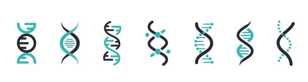 DNA Icons set. DNA Structure molecule icon. Vector molecule. Chromosome icon DNA Icons set. DNA Structure molecule icon. Vector molecule. Chromosome icon dna stock illustrations