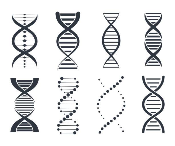 ilustraciones, imágenes clip art, dibujos animados e iconos de stock de conjunto de iconos de adn. colección signo, elementos e iconos genética. pictograma del símbolo de adn aislado sobre fondo blanco - adn