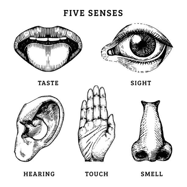 symbole-satz der fünf menschlichen sinne in gravierte stil. vektor-illustration der sinnesorgane - farbwahrnehmung stock-grafiken, -clipart, -cartoons und -symbole