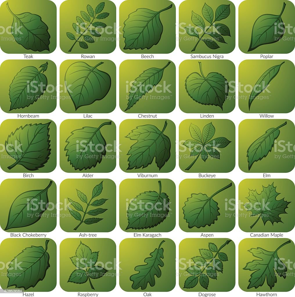 Icons with Leaves, Set vector art illustration