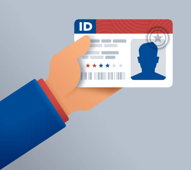 Identification Card Drivers License A person holding a driver license or identification card. id card stock illustrations