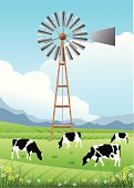 Cows and Old Windmill in a Field.