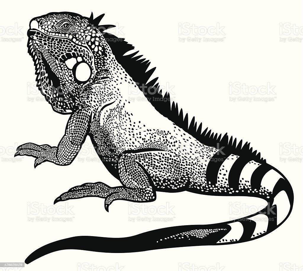 iguana vector art illustration