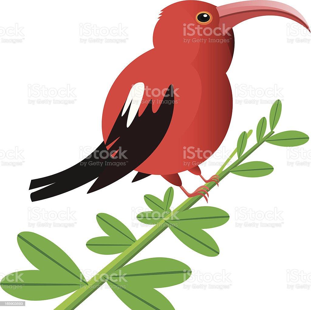 Iiwi royalty-free iiwi stock vector art & more images of animal